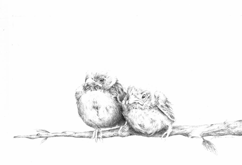 Gorriones - lápiz