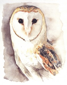 Ilustración, acuarela, lechuza, cuadros pintados a mano online