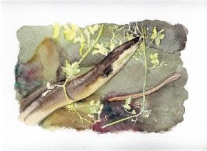 Ilustración, anguila, cuadros pintados