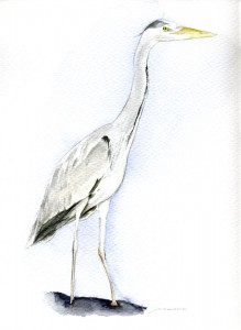 Ilustración, Garza Real, venta de cuadros decorativos