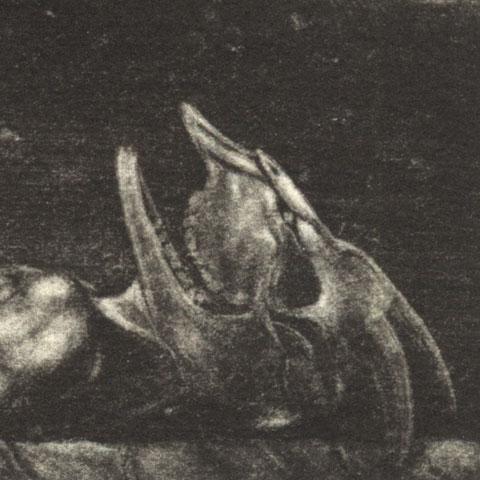 ilustrador vectorial fantástica dark goth